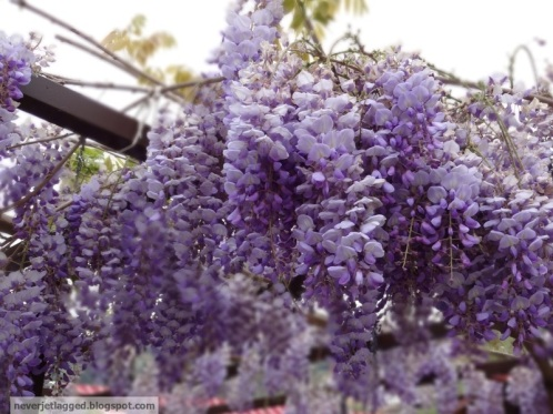 Flowers in Sirince Turkey